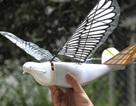 Trung Quốc sáng chế UAV chim bồ câu bịt mắt radar