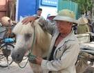 """Ông lão U70 miệt mài 30 năm """"bám ngựa"""" mưu sinh"""