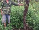Đắk Lắk: Dân bức xúc khi bị thu hồi đất nhưng mãi không được bồi thường
