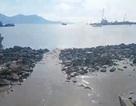 Hơn 2,7 triệu con tôm chết nghi do dự án tập kết 1 triệu khối bùn