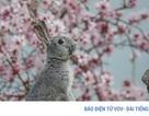 Những bức ảnh động vật đẹp mê hoặc như tranh vẽ trên toàn cầu