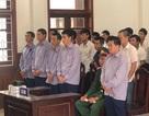 Phá rừng pơ mu ở Nam Giang, cựu phó đồn biên phòng lãnh 4 năm tù