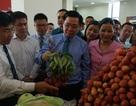 Hơn 100 doanh nghiệp Trung Quốc tham gia diễn đàn kinh tế về vải thiều