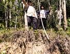 Nhiều vết nứt, sạt lở bất thường trên núi đe dọa người dân