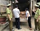 Lợn Trung Quốc tuồn về Việt Nam: Loay hoay điều tiết