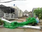 Giông lốc làm hư hại hơn 100 nhà dân ở Cà Mau