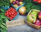 """Khăn bông hữu cơ: Nâng tầm xu hướng """"sống xanh"""""""