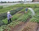 Chuyển đổi 26.000 ha đất nông nghiệp: Dân sẽ được lợi!