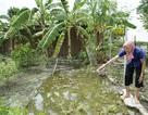 Sau cơn mưa, vườn nhà dân ngập nước lẫn xăng dầu