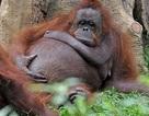 Động vật trông như thế nào khi mang bầu?