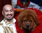"""Kinh sợ Ngao Tạng: Thú hoang giết người, """"thần khuyển"""" triệu USD"""