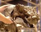 Phát hiện một loài giáp long mới ở Utah