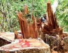 Để xảy ra mất rừng và khoáng sản, nhiều cán bộ bị kỷ luật