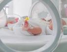 11 trẻ sơ sinh tử vong do sử dụng thuốc thử nghiệm Viagra