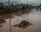 """Tâm sự xé lòng của nạn nhân sau """"cơn đại hồng thủy"""" tại Lào"""