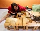 Khách thích thú chơi đùa trong quán cà phê nuôi đầy mèo hoang ở Sài Gòn