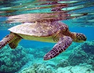 Chỉ được khai thác vì mục đích bảo tồn đối với các loài thủy sản đặc biệt nguy cấp