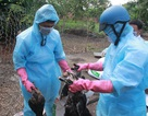 Phát hiện 4 người trong một nhà bị nhiễm cúm H1N1