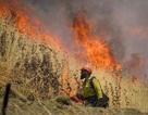 Hàng chục người tử vong vì nắng nóng kỷ lục ở Mỹ, Canada