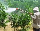 """Doanh nghiệp sản xuất phân thuốc giả tung chiêu """"vỏ ngoại, ruột nội""""... hại nông dân"""