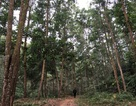 """Phú Thọ quyết """"đòi"""" hơn 3.000 ha đất của Tổng công ty Giấy"""