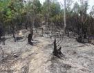 Đà Nẵng: Cháy lớn thiêu rụi 2 hecta rừng tràm