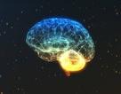 Trắc nghiệm: Liệu có phải chúng ta chỉ sử dụng 10% bộ não?