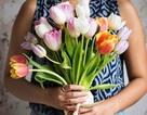 Lợi ích với sức khỏe tâm thần của hoa và cây xanh