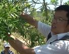 Ước vọng từ nhà khoa học trẻ để người Việt có lá gan khỏe mạnh