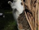Việc nhẹ lương cao: Sang Hy Lạp trông mèo, kiếm ngay 200 triệu/năm