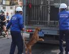Ra quân bắt chó thả rông ở trung tâm Sài Gòn