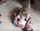 Khỉ đột nhập vào nhà bắt cóc trẻ con