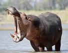 Đừng để thiệt mạng vì thích chụp ảnh động vật hoang dã!