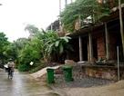 Cận cảnh nhem nhuốc của khu biệt thự bị bỏ hoang gần 10 năm giữa lòng Sài Gòn