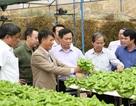 Sản xuất nông nghiệp Việt Nam lớn nhưng rất bấp bênh
