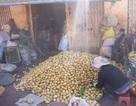 Gắn tem cho khoai tây Đà Lạt để chống hàng Trung Quốc giả danh