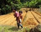Bảo tồn rừng để cải thiện chế độ ăn của trẻ em
