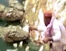 Kinh ngạc cụ ông đút thịt vào miệng 5 cá sấu ở Ấn Độ