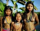 Máy bay không người lái phát hiện bộ lạc sống biệt lập chưa từng được biết tới
