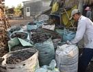Sóc Trăng: Nghề hầm than thu nhập cao nhưng ...nguy cơ ô nhiễm lớn