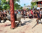 Bộ Văn hóa vào cuộc vụ thu tiền dân để tổ chức lễ hội đâm trâu