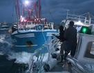 Ngư dân Anh-Pháp ném đá, bom khói trong cuộc đại chiến giành sò điệp