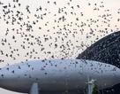 Gian lận cuộc đua chim bồ câu để ẵm thưởng 3,4 tỷ đồng