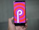 Android 9.0 P có tên gọi chính thức, bắt đầu phát hành đến người dùng