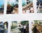 Triệt phá ổ nhóm trộm gỗ sưa ở Hà Nội