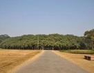 Cây đa to nhất thế giới có tán rộng hơn 14.400 m2