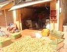 Điểm mặt 17 cơ sở kinh doanh nông sản Trung Quốc tại Đà Lạt