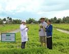 UNIBEN hỗ trợ nông dân thực hiện VietGAP sản xuất rau an toàn, hướng tới phát triển vùng nguyên liệu sạch