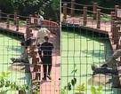Khách Trung Quốc say xỉn, vào khu bảo tồn… giẫm cá sấu