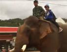 Xôn xao clip cậu bé cưỡi voi đi học
